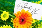Gerbera, gul tusensköna och kort undertecknade tack på gröna ba — Stockfoto