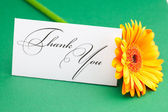 Gerbera and card signed thank you on green background — Stock Photo