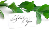 Branch with green leaves and a card signed thank you isolated on — Stock Photo
