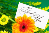 Yellow daisy,gerbera and card signed thank you on green backgrou — Stock Photo