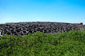 Tires and grass against the blue sky — Stock Photo