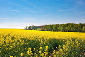 Field of yellow rape and hills against the blue sky — Stock Photo