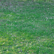 Background of spring green grass - Stockfoto