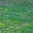 Background of spring green grass — Foto Stock