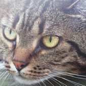 Portrait of a beautiful striped cat outdoor — Stock Photo