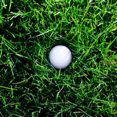 Background of spring green grass and golf ball — Stock Photo