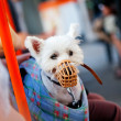 Muzzled dog sitting in a bag - Stock Photo