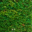 Background of lush green leaves - Stock Photo
