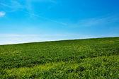 Weide tegen de blauwe hemel — Stockfoto