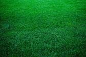 Sfondo di erba verde lussureggiante — Foto Stock