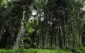 竹の森 — ストック写真