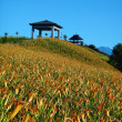 Daylily flower at sixty Stone Mountain in Taiwan Hualien festival - Zdjęcie stockowe