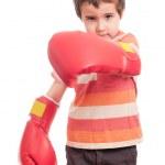 mały atak bokser — Zdjęcie stockowe