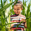 Stock Photo: Little boy investigate yong corn