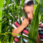 Little boy hide in corn — Stock Photo