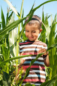 Little boy investigate yong corn — Stock Photo