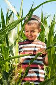 Little boy investigate yong corn — Stock Photo