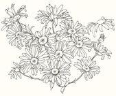 Daisy flowers. — Stock Vector