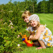 Kids in the garden — Stock Photo