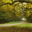 Autumn type landscape - Foto Stock