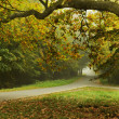 Stock Photo: Autumn type landscape