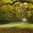 Autumn type landscape — Stock Photo