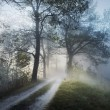 Stunning foggy landscape — Stock Photo