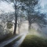 Stunning foggy landscape — Stock Photo