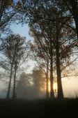 Magnifique paysage brumeux — Photo