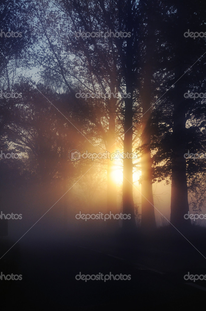 Stunning foggy landscape — Stock Photo #5827873