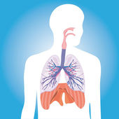 Human respiratory system. vector illustration — Stock Photo