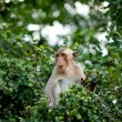 Monkey sit on tree top in forest — Stock Photo #5813539