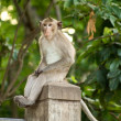 Monkey sit on column — Stock Photo #5813833