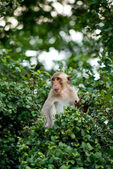 Monkey sit on the tree top in the forest — Stock Photo