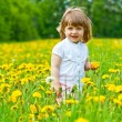Little girl in a meadow — Stock Photo