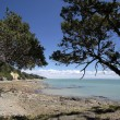 Coast line near Thames, Coromandel - Stock Photo