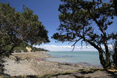 Coast line near Thames, Coromandel — Stock Photo