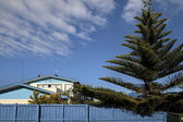 Blue house with Norfolk pine — Stock Photo