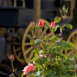 Royalty-Free Stock Photo: Roses and old covered wagon