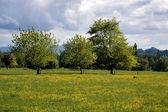 Green meadows — Stock Photo