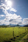 Green meadows and pastures — Stock Photo