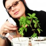 Woman watering basil plants — Stock Photo #5597400