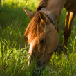 Brown horse eat fresh grass — Stock Photo