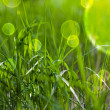Fairy tale green grass — Stock Photo