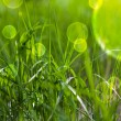 Fairy tale green grass - Stock Photo