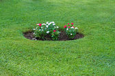 Flowerbed with red and white flowers — Stock Photo