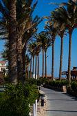 Sidewalk palms and clear sky — Stock Photo