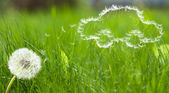 Flying dandelion's seed form of a car — Stock Photo