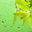 Macro of the leaves and water drops — Stock Photo