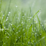 Grass under the sprinkler — Stock Photo